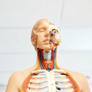 Cursus Anatomie en fysiologie